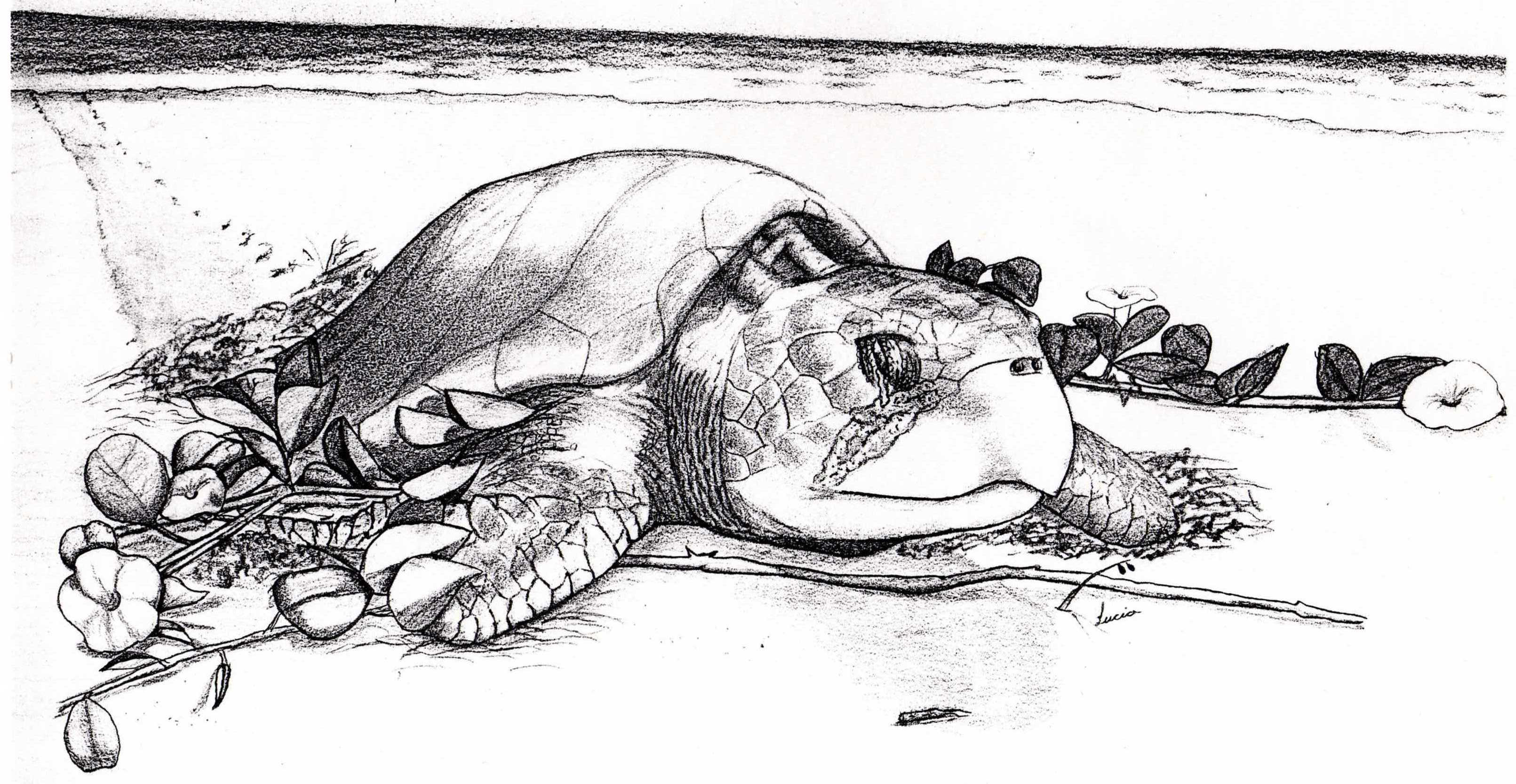 Original sea turtle artwork by Lucia Guillen